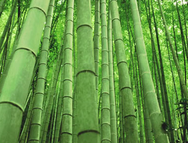 Bamboo-Clothing