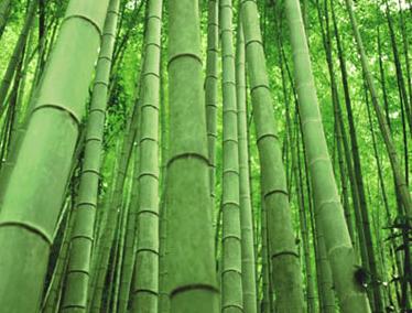Bamboo-Clothing