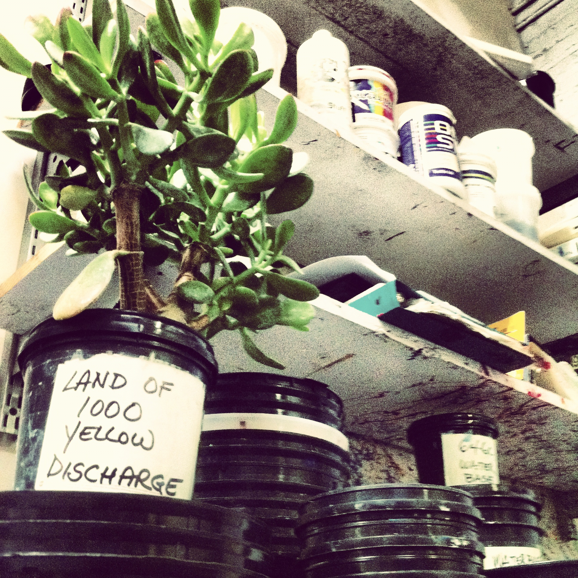 Ink Room Plant