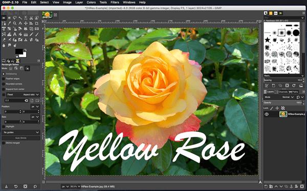 Flower-Raster Image